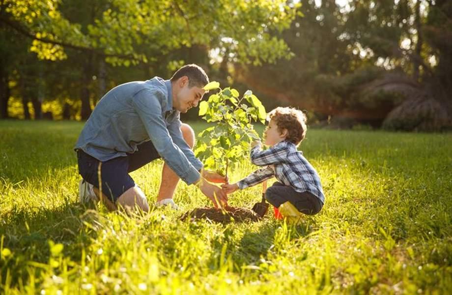 Otac i sin zajedno sade voćku
